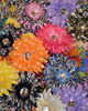 "4"" Assorted Crystal Gerbera Flowers (Dozen)"